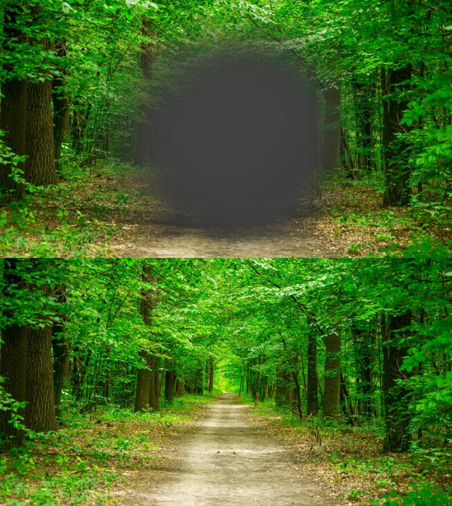 En skov med en grå prik i midten, der angiver, hvordan man ser, hvis man har AMD